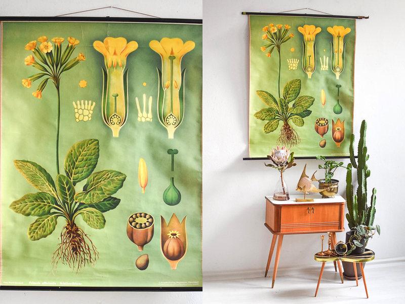 Botanical Illustration Nursery Print