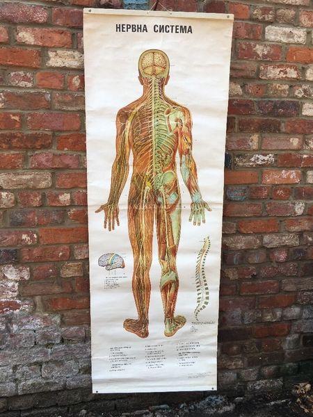 Vintage Anatomy Bulgarian Teaching School Medical Science Poster