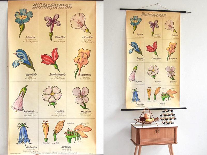 Vintage Botanical School Poster Educational Print 1960s